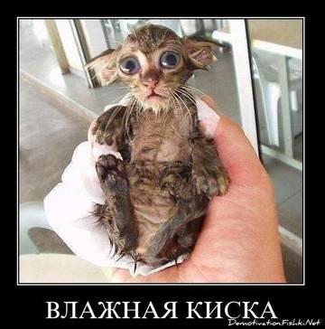 http://s4.uplds.ru/t/QESko.jpg